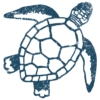 footer turtle